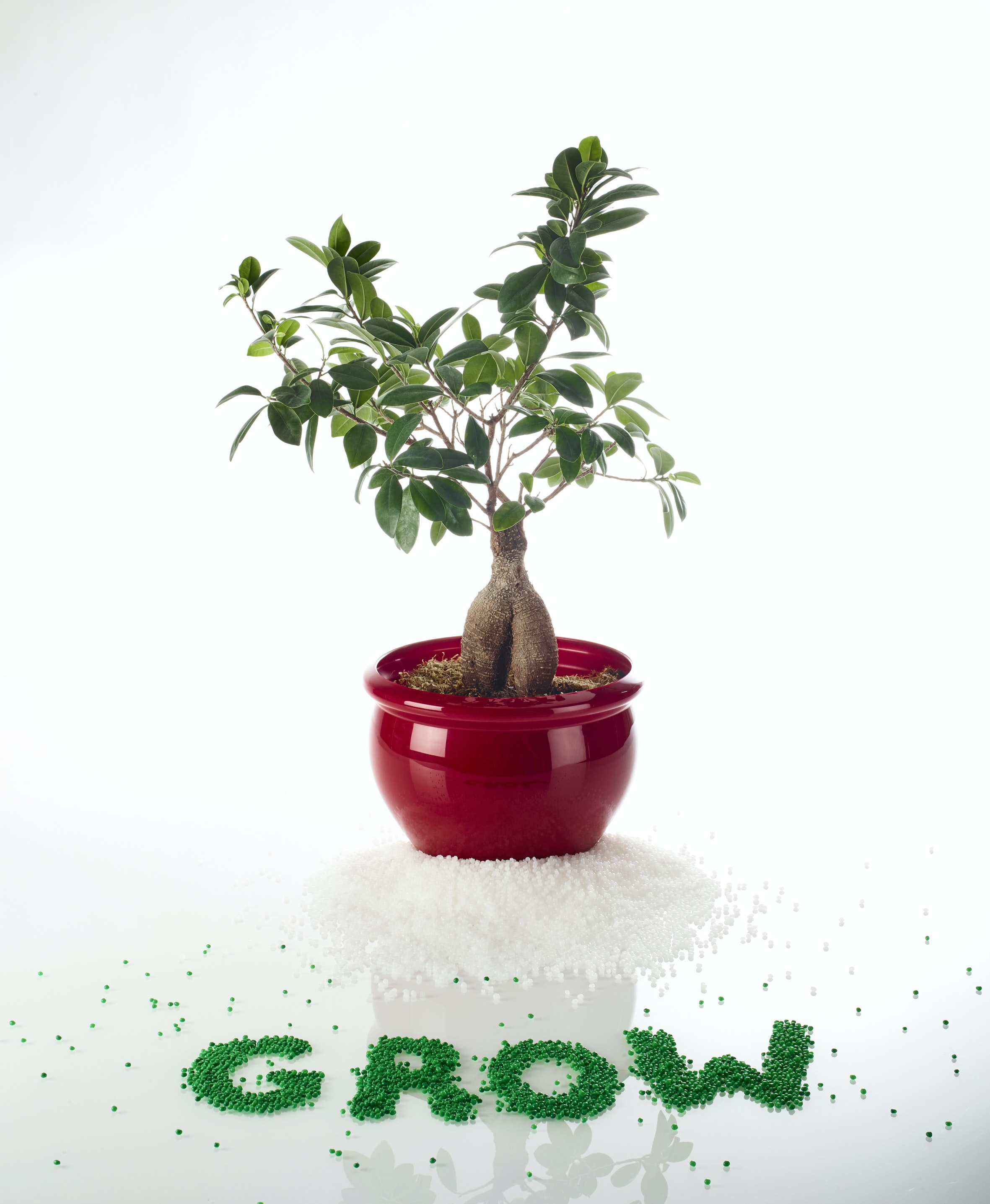 GROW bonsai klebstoff